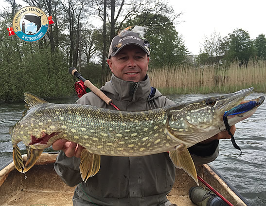 Pike fishing at our lodge. Fly fishing and spin fishing for danish pikes!