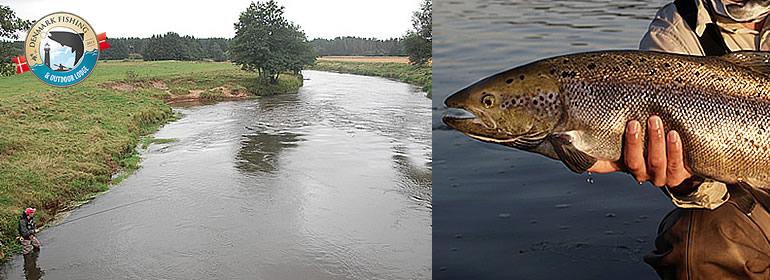 Salmon fishing in Denmark